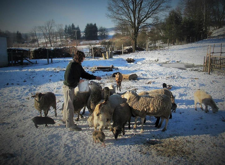 lucie-jarosova-ovce